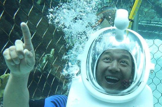 Sea Life Park Hawaii Admission and ...