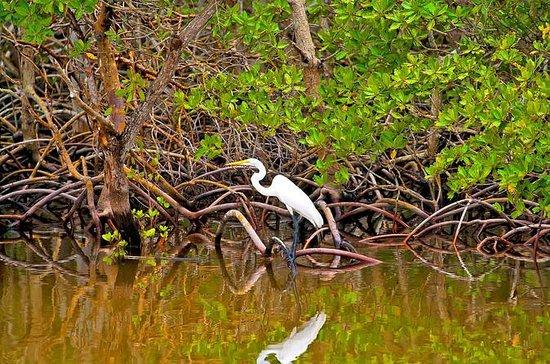 Tournée Golfito Mangrove