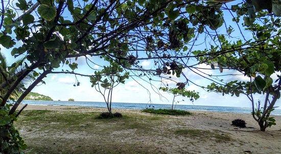 TT Naiyang Beach Phuket: The view from the TT.