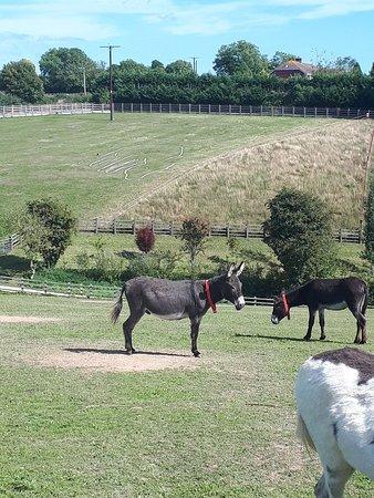 The Donkey Sanctuary: 20180909_140247_large.jpg