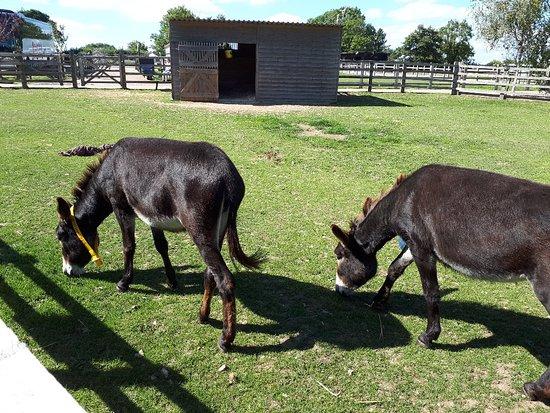 The Donkey Sanctuary: 20180909_130955_large.jpg
