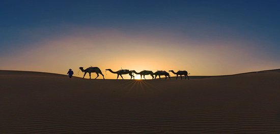 Marrakech-Tensift-El Haouz Region, Morocco: camels pictured at the sunset, in Erg Chigaga