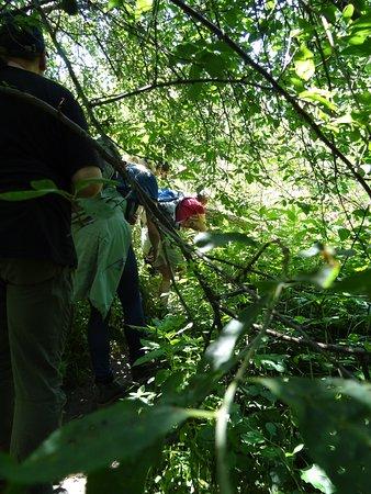 Auen-Wildnispfad Wanderung