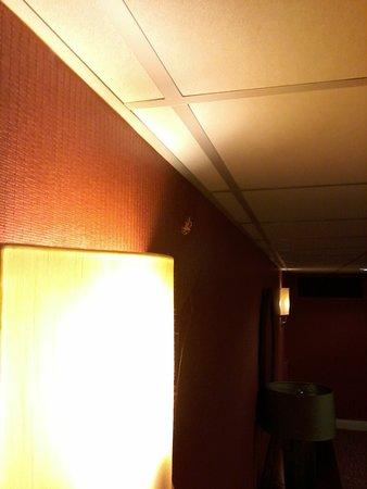 spider on light