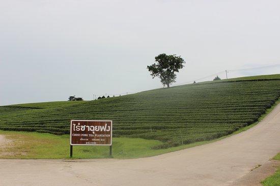 Mae Chan, Thailand: Tea Plantation
