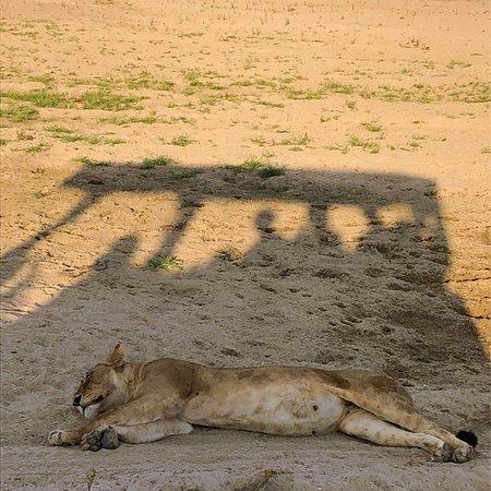 Ruaha National Park, Tanzania: photo4.jpg