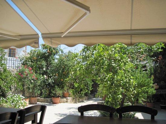 Vori, Griechenland: le jardin vu de la terrasse