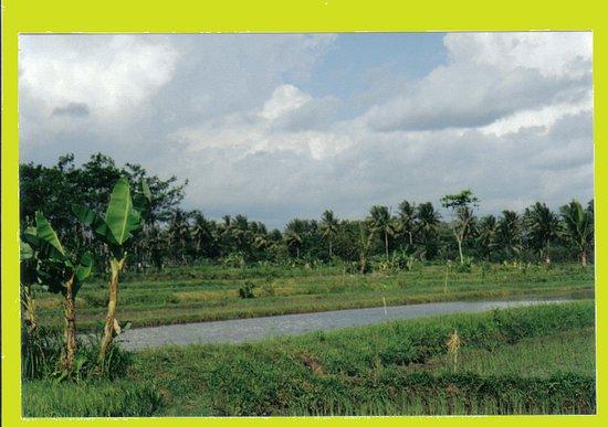 Ιάβα, Ινδονησία: campagne javanaise