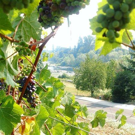 Elkton, Oregon: Our view of the Umpqua