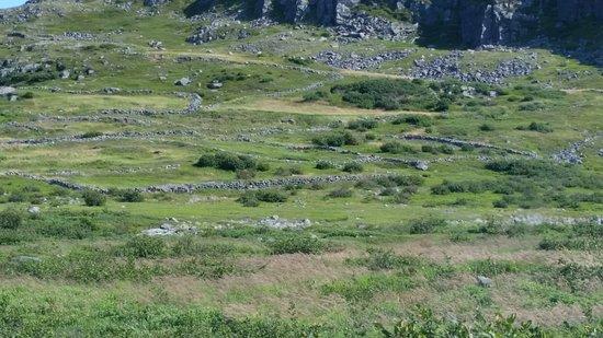 Grates Cove Walled Landscape