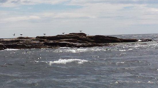 Big Bras d'Or, Канада: Cormorants (I think)