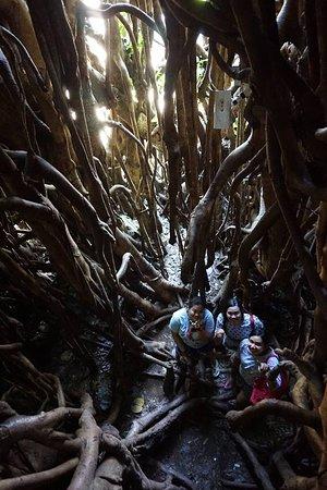 Провинция Аврора, Филиппины: Millennium Tree