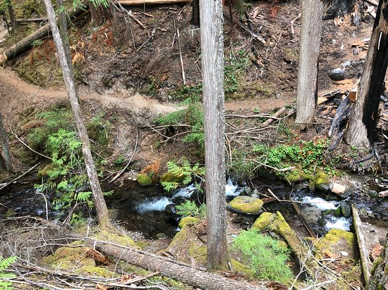 Crystal Mountain, WA: Picture of Hiking trail behind resort