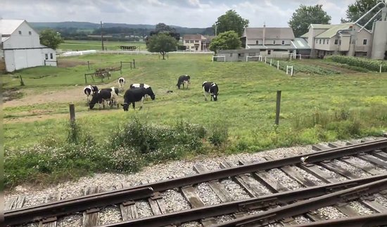 Округ Ланкастер, Пенсильвания: Criação de gado em fazenda Amish