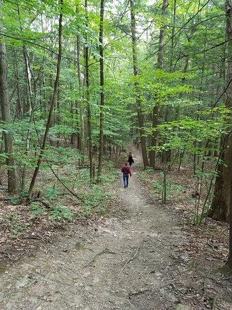 Rotterdam, Nova York: Hiking through the woods