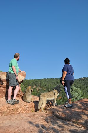 Colorado Wolf Adventures: Top of the Hill