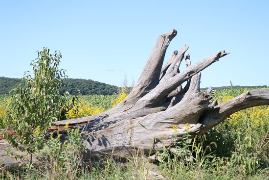 Ponca, NE: Driftwood along river trail
