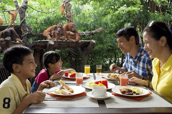 Jungle Breakfast with Orangutans at Singapore Zoo with Return...