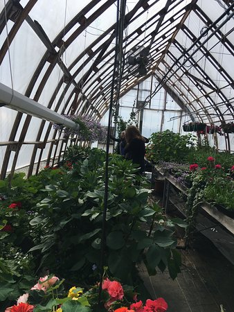 Talkeetna, AK: An inside look at the greenhouses in June at Birch Creek Ranch.