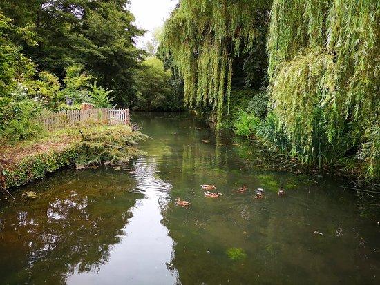 Norton Sub Hamdon, UK: IMG_20180811_115727_large.jpg