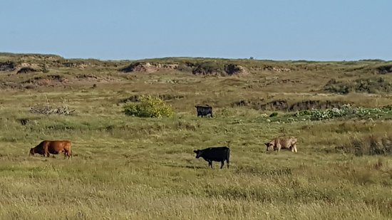 Medicine Lodge, KS: 20180911_174055_large.jpg