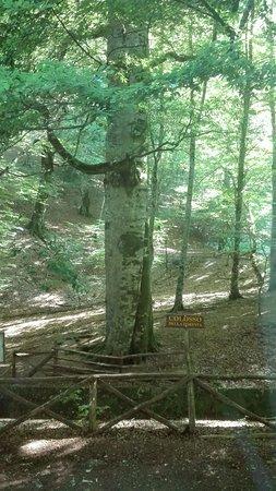 Foresta Umbra Photo