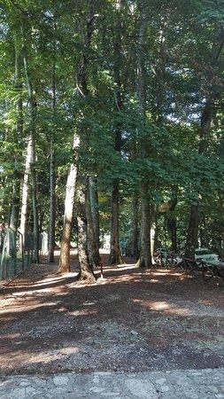 Foresta Umbra Image