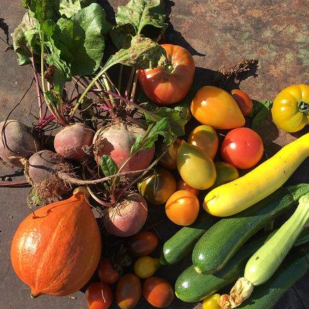 Bussieres, França: récolte du potager bio