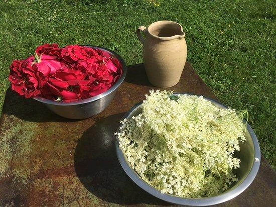 Bussieres, França: récolte de fleurs