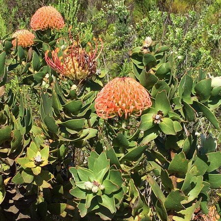 Grootbos Private Nature Reserve, South Africa: photo7.jpg
