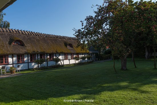 Praestoe, الدنمارك: Kirsebærkroen se fra æblehaven