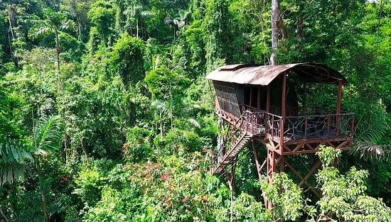Joli mais... - Avis de voyageurs sur Maquenque Eco-Lodge, Boca ...