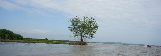 ควนขนุน, ไทย: A lonely tree in the middle of the lake.