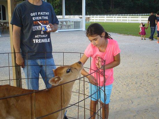 Ayden, Βόρεια Καρολίνα: The baby calf.
