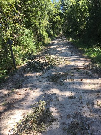 Wild Goose State Trail: Lots of debris on the trail