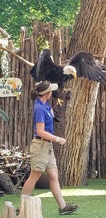 Dallas Zoo: 20180823_111309_large.jpg