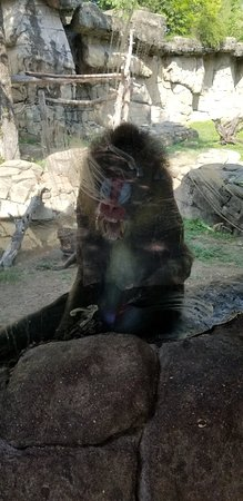 Dallas Zoo: 20180823_104206_large.jpg