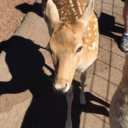 Grand Canyon Deer Farm: photo0.jpg