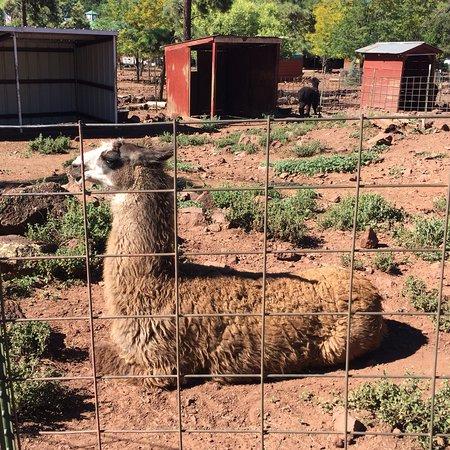 Grand Canyon Deer Farm: photo1.jpg