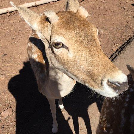 Grand Canyon Deer Farm: photo4.jpg