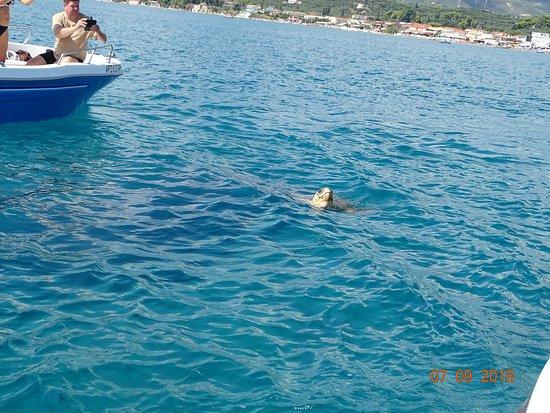 Lithakia, Grekland: Turtles Ahoy