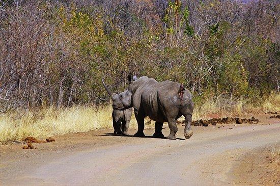 Pabeni Gate Kruger National Park: Protective mother just inside the gate