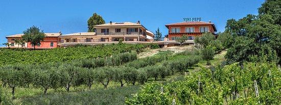 Torano Nuovo, Włochy: Azienda