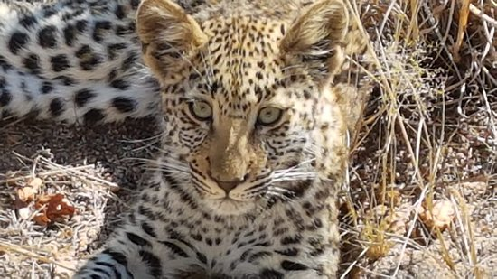 Ulusaba Private Game Reserve, South Africa: Beautiful sightings
