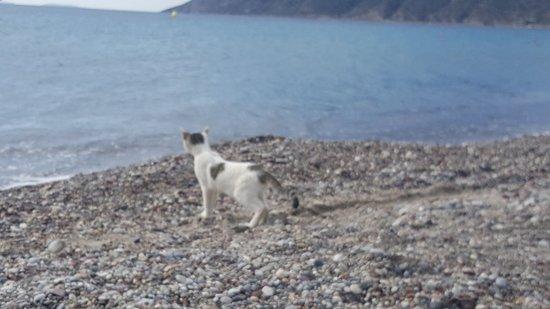 Agios Stefanos Beach: 20180911_095100_large.jpg