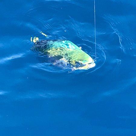 Lefkada Fishing Cruises : photo3.jpg