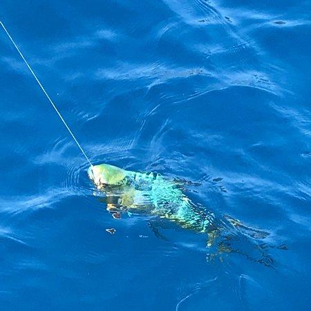 Lefkada Fishing Cruises : photo4.jpg