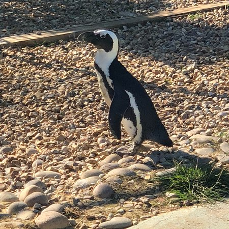 Amazon World Zoo Park: photo0.jpg