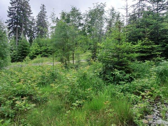 Bischofsgrun, Germany: Sommerrodeln im Grünen auf dem Oxenkopf