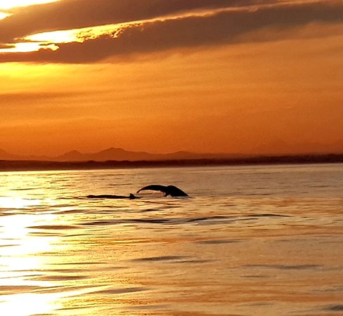 Port St Francis, South Africa: Sunset Whale Tail
